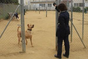 El nou espai d'esbarjo per a gossos és el més gran de tota la ciutat i es podrà utilitzar a partir del febrer. // Ajuntament de Sant Boi