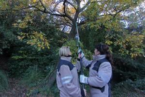 Els voluntaris forestals van estar a la Font de Gualbes a la seva primera acció // Ajuntament de Sant Boi