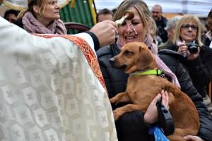 Un gos és beneït pel mossèn als Tres Tombs // Maria Rubio