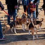 Un grup de gossos es relacionen en un parc de la ciutat // Ajuntament de Sant Boi