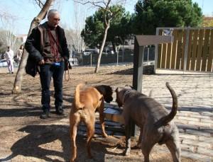 Diversos gossos beuen de la font de l'espai d'esbarjo de la Muntanyeta // David Guerrero