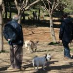 Propietaris i gossos estrenant el nou espai d'esbarjo per a gossos del parc de la Muntanyeta // David Guerrero