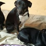 Animals del Refugi Municipal d'Animals de Companyia // RMAC