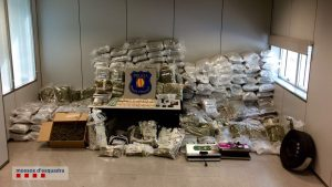 Imatge de la marihuana comissada // Mossos