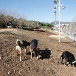 L'àrea d'esbarjo per gossos del parc de la muntanyeta // Àrea Metropolitana de Barcelona
