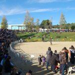 La desfilada de gossos en adopció reuneix a molt de públic // Marc Pidelaserra