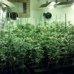 Els detinguts tenien una plantació de marihuana en diversos immobles // Mossos d'Esquadra